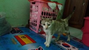 Detty Kucing Kosan