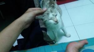 Kucing Dielus